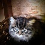 Katze barfen – warum die Rohernährung gerade für Katzen sinnvoll ist